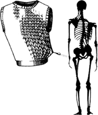Illustration of craniosacral area